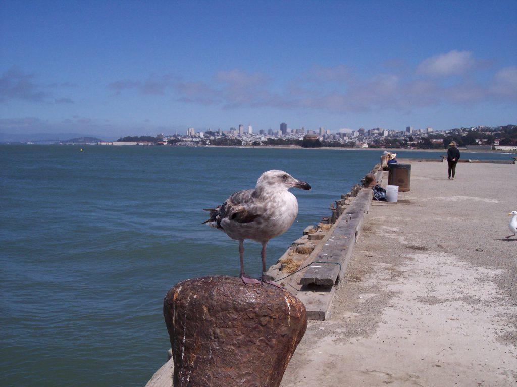 Vogel in San Francisco