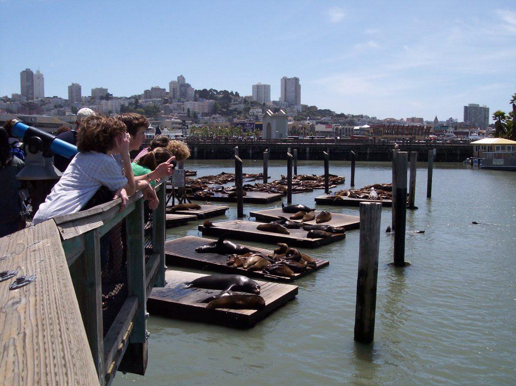 Robben direkt in San Francisco