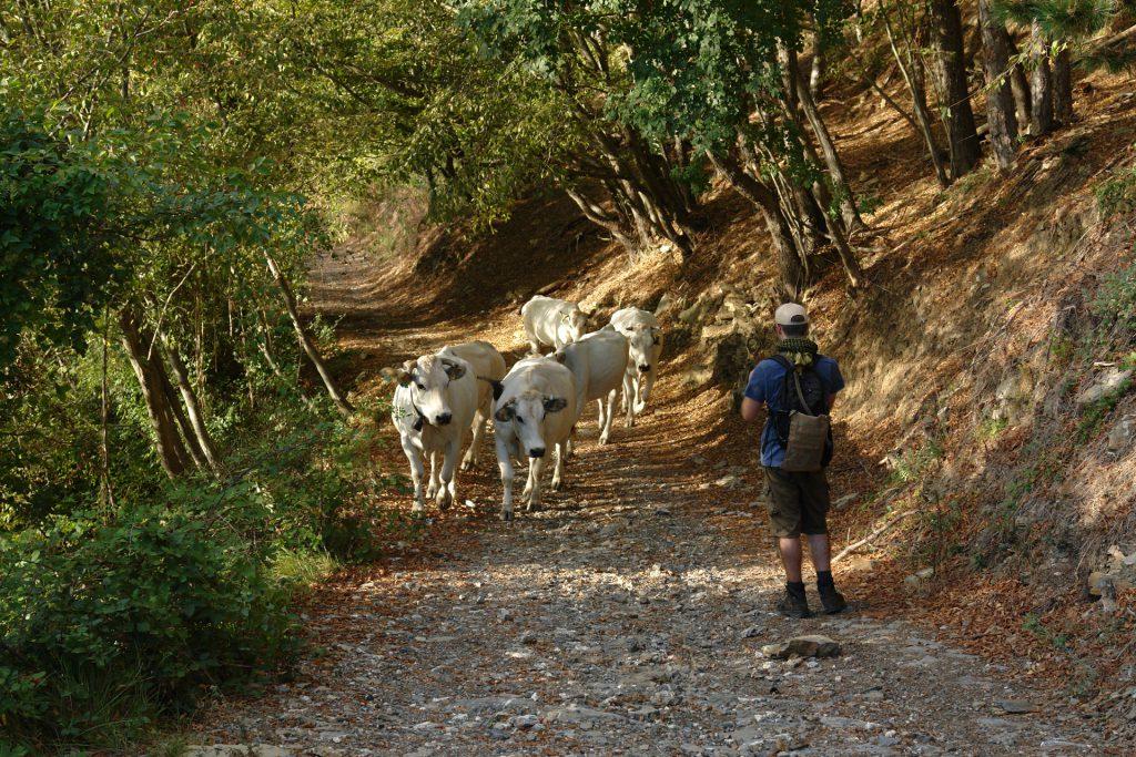 Wanderung am Pizzo d'Evigno