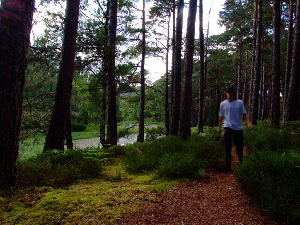 Saph im Wald