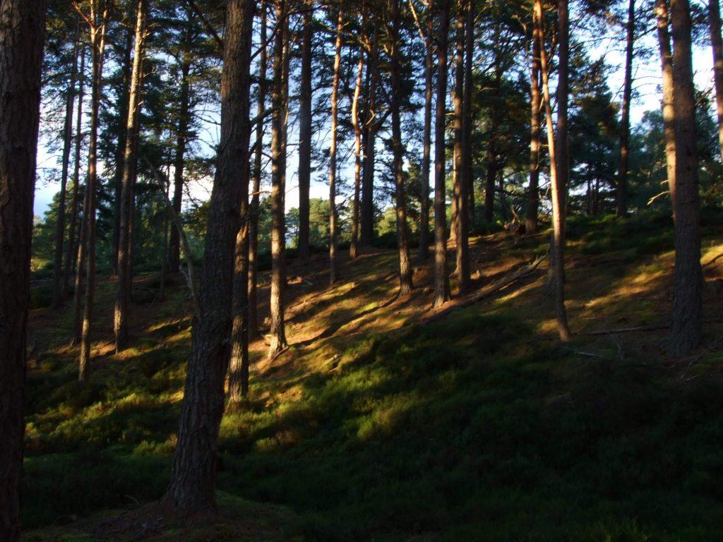 Weiches Abendlicht im Wald