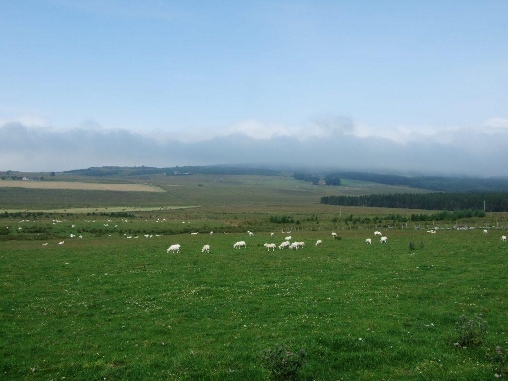 Nebel über den Schafweiden
