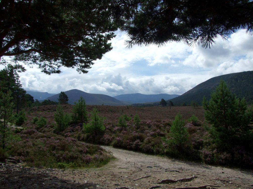 Schottische Heide bei den Cairngorms