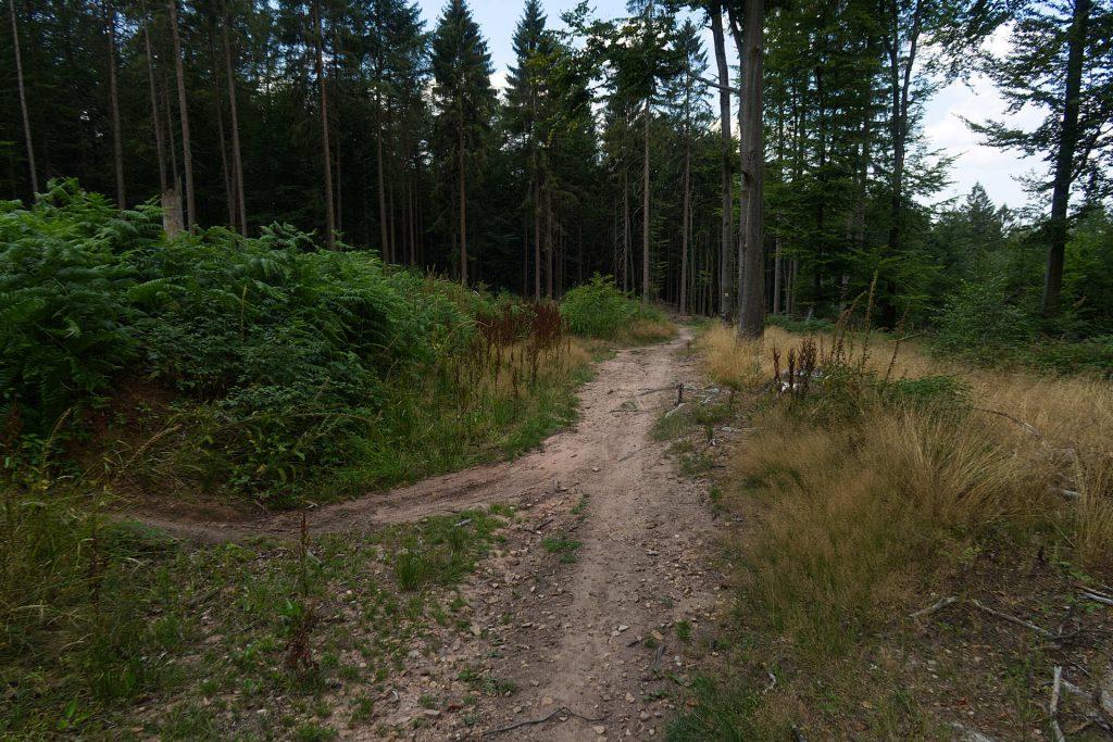 Trampelpfad durch den Odenwald