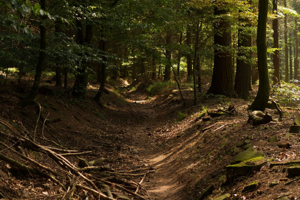 Hohlweg im Wald