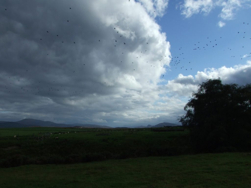 Vögel und eine weite Landschaft