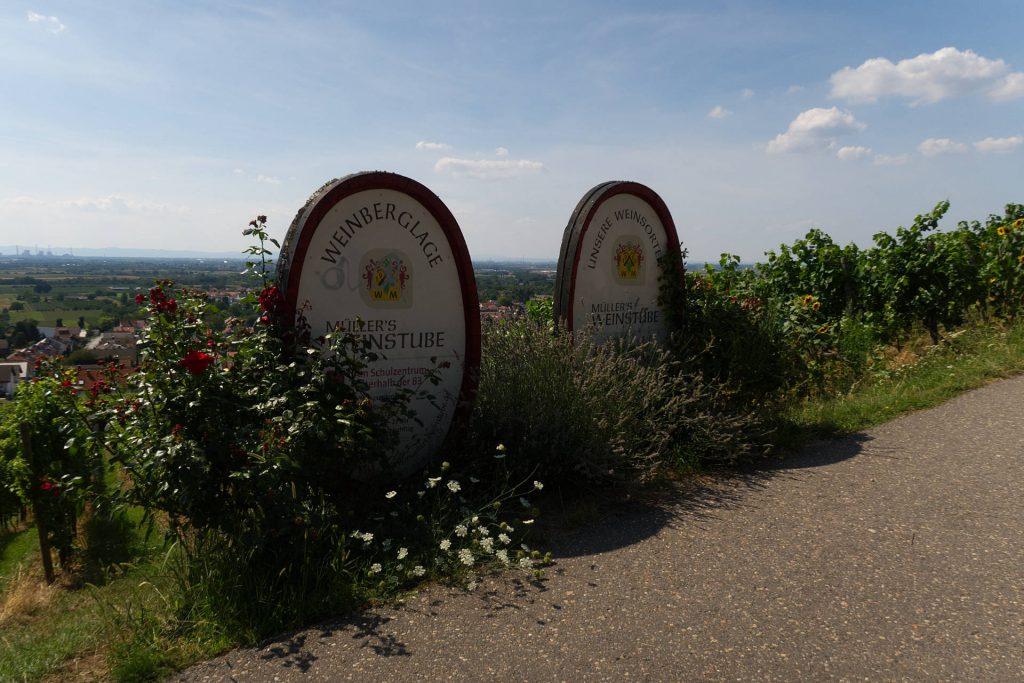 Weinbaugebiet Schriesheim