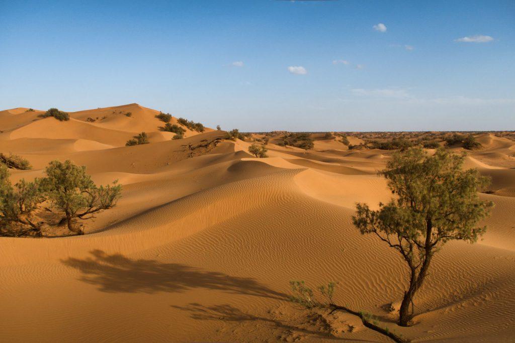 Dünen der Zagora-Wüste