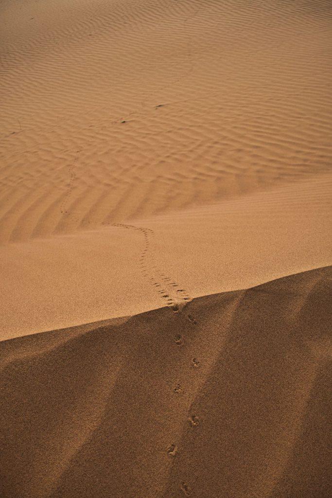 Käferspuren im Sand