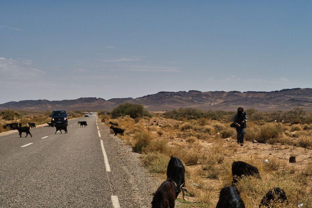 Ziegenherde auf der Straße