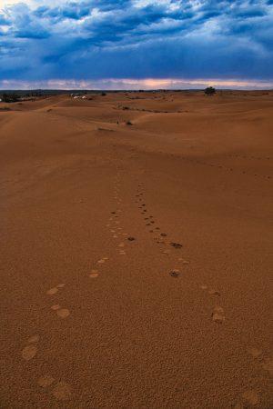 Abendspaziergang beim Wüstencamp