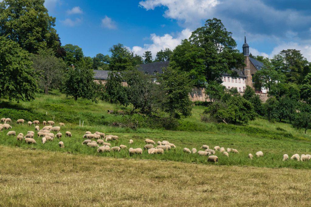 Stift Neuburg bei Ziegelhausen
